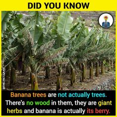 - All the Interesting Information You're Wondering Here Wierd Facts, Wow Facts, Intresting Facts, Real Facts, Wtf Fun Facts, Funny Facts, Strange Facts, Crazy Facts, Funny Memes