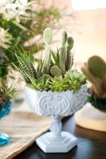 Cactus and Succulents in Milk Glass ((( Two of my favorite things ))) Succulent Bowls, Succulent Centerpieces, Succulent Arrangements, Succulent Terrarium, Succulents In Containers, Cacti And Succulents, Planting Succulents, Glass Containers, Cactus Plants