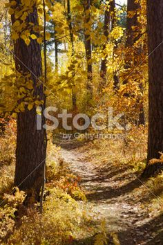 Foot Path in Autumn Woods Royalty Free Stock Photo