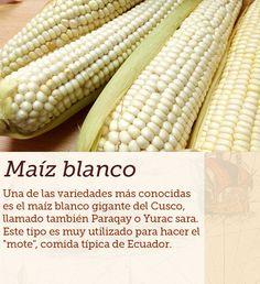 #maiz #blanco #cocinasdelmundo #comida