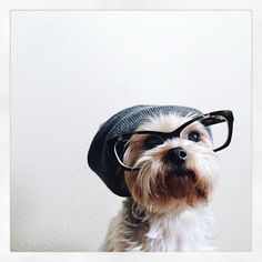 Looking stylish on a beautiful Monday morning!  We have cut off Aprils boxes so if you happen to purchase a box from now you'll be receiving your package in May. To those Puppers that are giving our small business a shot at doing what we love - thank you thank you thank you!!!  Keep your noses sniffing out for Elsa's Birthday giveaway- will be drawn later this afternoon  Repost via Pinterest.  #mypupper #sunshinecoast #sunnycoast #dogsofnoosa #Australia #aussiedogsrule #dogsofaustralia…