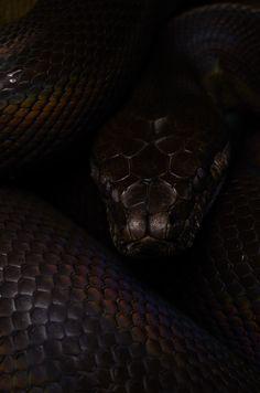 Evil eye by mehelya Black Mamba Snake, Snake Wallpaper, Big Dragon, Black Beast, Snake Art, Beautiful Snakes, Slytherin Aesthetic, Snake Eyes, Character Aesthetic