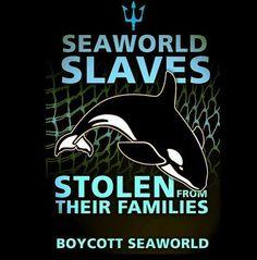boycott SeaWorld!! #blackfish #thecove | e q u a l i t y ...
