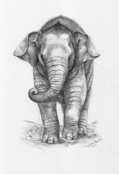 High Quality Elephant Pencil Drawing Inspired T Shirts Posters Mugs And More By Independent Artists Designers From Around The World
