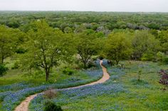 Cruisin' through the Bluebonnets in spring... Doesn't get any more colorful! #ridecolorfully