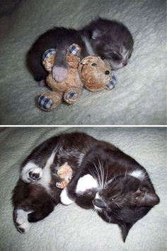 same kitty with same toy CUTE!!!!