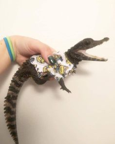 Tiny alligator in a minion shirt Cute Baby Animals, Animals And Pets, Funny Animals, Cute Reptiles, Reptiles And Amphibians, Animal Pictures, Cute Pictures, Minion Shirts, Baby Alligator
