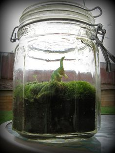 Dinosaur jar terrarium....oh my, Michael would go wild for this!