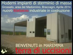 MAY 2014 : Maremma, land of killings and abuse on animals. They are building a brand new, state of the art slaughtering plant in the outskirts of Grosseto. The Madonnino Industrial estate, near Braccagni. Mass murder as  business project, mass murder as an economic developement opportunity, so they say.