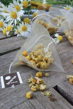 A simple guide to sowing your own chamomile using a chamomile teabag.