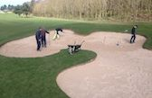 Almost complete...  Once the bunkers had been shaped and the drains completed they were filled with sand. The project used 1000 tonnes of new sand.