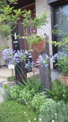 バラと宿根草の咲く心癒される庭づくり #95 すずさん | アイリスプラザ_メディア Plants, Planters, Plant, Planting