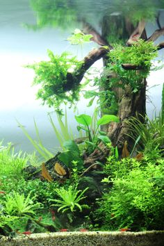 from Fuck Yeah Aquascaping