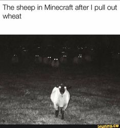 The sheep in Minecraft afterl pull out wheat - iFunny :) Really Funny Memes, Stupid Funny Memes, Funny Relatable Memes, Funny Stuff, Minecraft Funny, Minecraft Stuff, Funny Images, Funny Pictures, Quality Memes