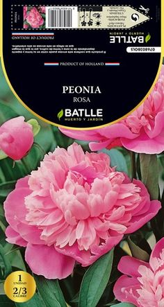 Bulbo de Primavera Peonia Rosa 1 ud