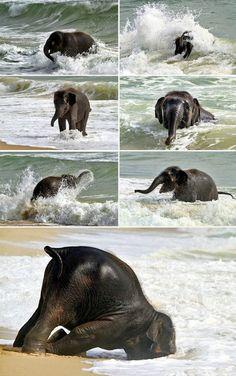 Sí, todavía con las playas!  Esa última foto me está matando con ternura Crédito: Willy ThuanSource: aquí