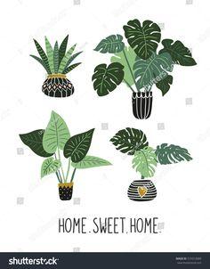 House Plants Big Leaves Tropical Garden Stock Vector