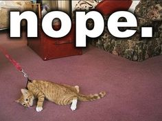 Here are the top 30 funny animal humor pictures which make you laugh. These funny and hilarious animal humor Crazy Cat Lady, Crazy Cats, Funny Cute, Funny Shit, Hilarious Jokes, Funny Stuff, I Love Cats, Cute Cats, Funny Kitties