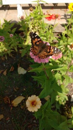 Insects, Plants, Animals, Butterflies, Animais, Animales, Animaux, Animal, Plant