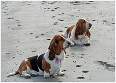 Beach Dogs | Flickr - Photo Sharing!