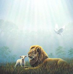 Pictures Lion Lamb Together   ... lion and the fatling together; and a little child shall lead them