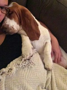 Basset Hounds Hate To Bond With Their Humans Basset Puppies, Hound Puppies, Basset Hound Puppy, Beagles, Cute Puppies, Cute Dogs, Dogs And Puppies, Bassett Hound, Dog Lady