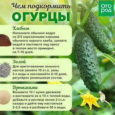 Herbs have practical value, serve a purpose, and with herb gardening you can actually use your plants. Organic Farming, Organic Gardening, Gardening Tips, Vegetable Garden, Garden Plants, Types Of Herbs, Herb Garden Design, Plant Diseases, Small Farm