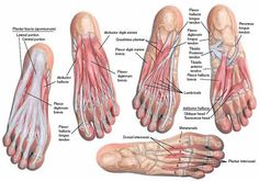Plantar Foot Anatomy FA10