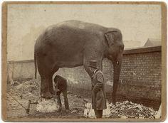 vanda-elephant-circus
