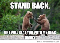 Very cute bear karate Karate, Baby Animals, Funny Animals, Cute Animals, Animal Memes, Animal Humor, Animal Antics, Large Animals, Wild Animals