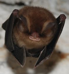 lil grin Just too cute. Baby Animals, Funny Animals, Cute Animals, Reptiles, Mammals, Beautiful Creatures, Animals Beautiful, Unusual Animals, Bat Species