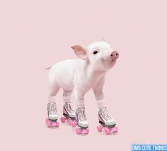 http://omgcutethings.com/wp-content/uploads/2012/08/pigs-in-costumes-omg-cute-things-082312-08.jpg