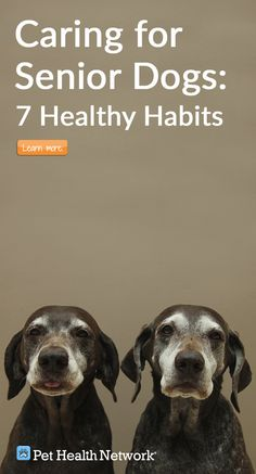 7 Healthy Habits for your Senior Dog #pethealthnetwork #seniordog #dog