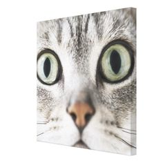 >>>Hello          Cat face stretched canvas print           Cat face stretched canvas print so please read the important details before your purchasing anyway here is the best buyShopping          Cat face stretched canvas print please follow the link to see fully reviews...Cleck Hot Deals >>> http://www.zazzle.com/cat_face_stretched_canvas_print-192627830196513581?rf=238627982471231924&zbar=1&tc=terrest
