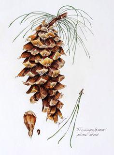 JoAnna Abrahamian: Norwegian Pine
