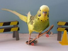 Petty Art — your dash could use some BIRDS ON SKATEBOARDS!!