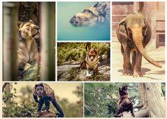 fotocollage voor je facebook pagina of canvas