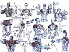 Shoulders are one of the most important groups of muscles that are to be taken care of during bodybu...