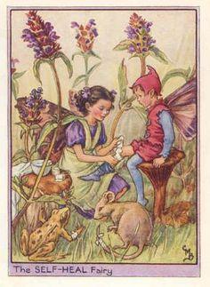 FLOWER FAIRIES: SELF HEAL FAIRY.Cicely BARKER. c.1948. OLD PRINT