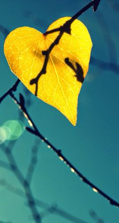 Falling in love with fall.  iOS8 HD wallpaper for iPhone and iPod touch