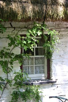 I have a passion for the windows in Ireland. This being one in the village at Bunratty Castle.