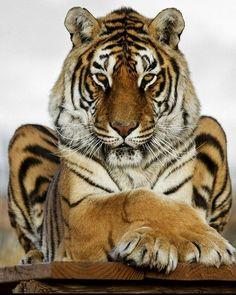 Majestic King | Photography by ©Cheryl Nestico #Wildgeography