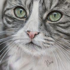 "Katzenportrait ""Miri"" ~ Zeichnung Katze ~ Pastell  ~ cat portrait ~ cat painting - pastel ~ Jutta Pallasch ~ Ref.Foto: Fifemi.Nuri"