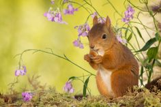 little wondering by Geert Weggen / 500px