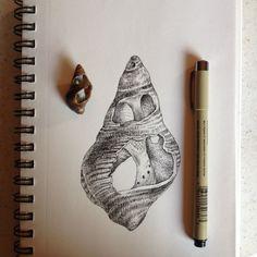 shell study Organic Forms, Shell Drawing, A Level Art Sketchbook, Natural Form Art, Sea Life Art, Seashell Art, Art Studies, Art Drawings Sketches, Whimsical Art