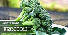 broccolifac/broccoli es  una verdura muy buena para la diabetes.