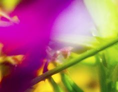 """Check out new work on my @Behance portfolio: """"Nature like... art!"""" http://be.net/gallery/52229559/Nature-like-art"""