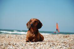 Beach Weenie
