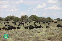 Arizona cattle ranch