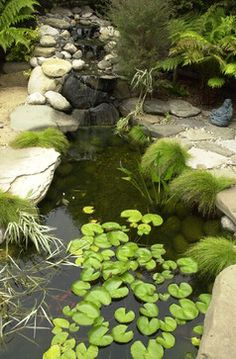 1000 images about pond ideas on pinterest ponds for Zen garden pond